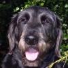 Senna the best dog who ever lived....
